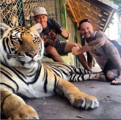tiger-poses-with-humans